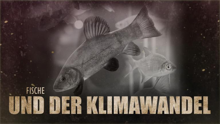 Klimawandel, Fische, Fischserben, Wassertemperaturen